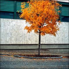 Autumn Streets - Fuji Provia 100F (magnus.joensson) Tags: sweden ångermanland örnsköldsvik october street rolleiflex fuji provia 100f exp 6x6 e6 epson v800 scan