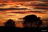 _DSC4617 (Adriano Clari) Tags: aggiungi tag sunset tramonto nuvole clouds cielo sky colori colours rosso red adriano clari esterno outdoor albero