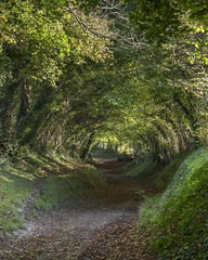 Halnaker Holloway (Forgotten Heritage) Tags: explore green england south downs chichister trees holloway tunnel land path road ancient