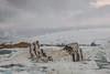 Islanda-37 (msmfrr) Tags: panorama landscape vento wind jökulsárlón ghiaccio ghiacciaio glacier lagoon ice sea spiaggia beach islanda iceland alba sunrise montagna cielo acqua paesaggio mare roccia neve baia iceberg water clouds nuvole