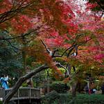 Hibiya Park in autumn (日比谷公園)