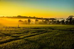 un matin quelque part (yannickmeh) Tags: bretagne aurore campagne