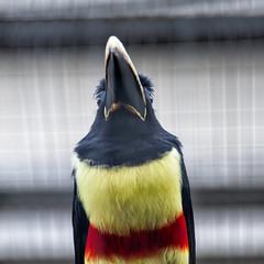 Landgoed / Zoo Hoenderdaell (Herman1705) Tags: annapaulowna noordholland nederland hoenderdaell zoo dierenpark dierentuin