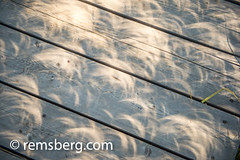 Crescent shaped shadows from solar eclipse on wooden deck, Grand Tetons National Park, Teton County, Wyoming (Remsberg Photos) Tags: eclipse grandteton jackson landscape mountains nationalpark solar tetons west wyoming colorimage westernusa horizontal outdoors sunlight sun circular pattern texture crescent usa