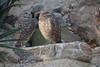 IMG_2739 (neatnessdotcom) Tags: new york city nyc bronx zoo tamron 18270mm f3563 di ii vc pzd canon eos rebel t2i 550d