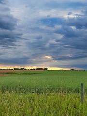 Blue Clouds at Sunrise (Bracus Triticum) Tags: blue clouds sunrise sky morning landscape field rural アルバータ州 alberta canada カナダ 8月 八月 葉月 hachigatsu hazuki leafmonth 2017 平成29年 summer august