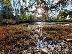 Marshy. (thnewblack) Tags: lg v30 outdoors nature britishcolumbia beautiful smartphone android 16mp f16 wideangle