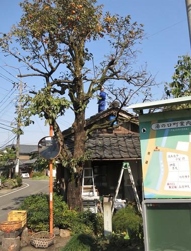 persimmon picker on Nov. 5 on the old Hokuriku road