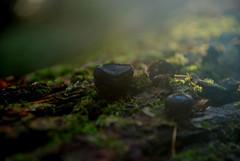 DSC_1867 (FMAG) Tags: 2017 żabieniec zalesie jesien mushrooms