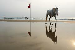 Agonda Beach (Ma Poupoule) Tags: cheval horse agonda goa inde india asie plage beach mer sea ombre reflet reflets shadow sable