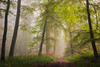 L'automne (Thomas Vanderheyden) Tags: automn automne foret forest landscape paysage chemin road nature colors couleur fog brume brouillard ambiance atmosphere ngc beautifulearth thomasvanderheyden tree france