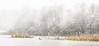 snow, lots of snow (tvdijk19) Tags: water nature birds landscape winter cormorant aalscholver netherlands flevoland winterlandscape ice ijs sneeuw riet cane painting schilderij codered coderood lake meer