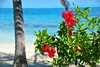 DSC_0757 (jirikoo) Tags: french polynesia tahiti france frenchpolynesia polynesian exotic tropics beach boat canoe lagoon island palm sand flowers ocean blue sea coral pacific southpacific volcano peak stingray shark crystal water borabora moorea bounty ferry marlon brando bird roads snorkeling sharks dolphin coconut