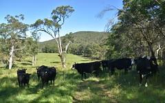 Lowreys Road, Bulahdelah NSW