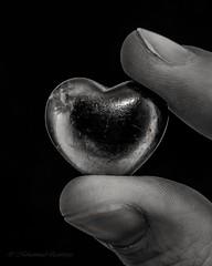 You Have Taken my Heart! (B&W) (Mohammed Qamheya) Tags: bnw blackandwhite blackwhite macro nikkor nikon afsmicronikkor600mmf28ged 60mm d500 hearts fingertips fingers mm