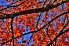The Grand Finale (HiJinKs Media...) Tags: autumn leaves faded autumnal colours colors colori colores yellow red seasonal seasons orange cage tree life escape free liberta branches sky blue green brown shadows light sun