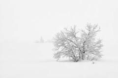 Mist on the mire I (Fjällkantsbon) Tags: blaikfjälletsnaturreservat brännåker evamårtensson gitsfjälletsnaturreservat lappland sverige dimma november västerbottenslän mist mire peatbog mono bw breathtakinglandscapes