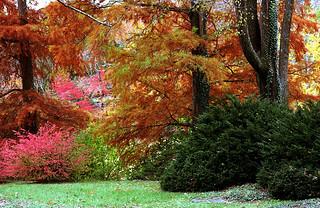 """Cincinnati – Spring Grove Cemetery & Arboretum """"Autumn Row"""""""