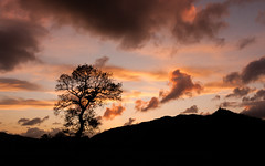 Machlud Dyfi ( Dyfi Sunset ) (Alan Hughes Mach) Tags: wales cymru machynlleth skyline gold dusk sunset sundown natural cloud weather dof automne autumn november valley walk ciel naturaleza himmel countryside eos canon 40d sky silhouette tree black landscape landschaft paysage contrast cielo welsh fall brown outside outdoor nature natur walking hike hiking baum arbre