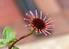 Hanging on by a thread (Pejasar) Tags: bloom blossom bransonlanding branson missouri thread web autumn