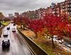 Storrow Drive ((Jessica)) Tags: storrowdrive brownstones newengland colorful autumn tree foliage street massachusetts cityscape beaconhill trees city boston fall backbay