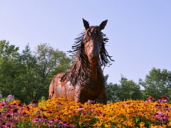 BE CAREFUL WHEN YOU MOUNT THIS HORSE (Rob Patzke) Tags: sculpture art metal horse lumix lx100 purple yellow flowers rust trees