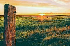Sommerurlaubserinnerung / summervacationmemorie (S. Boblest) Tags: summer sonne sonnenlicht sunset vacation urlaub nopeople brandenburg sun sommer