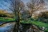 tree reflections (Beale.UK) Tags: suttonpark suttoncoldfield parks outdoors landscape landscapes bealeuk
