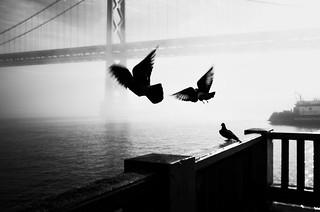 Three Birds: Bay Bridge in Black & White, part 2