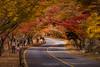 內藏山國立公園,Naejangsan,South Korea (TaiNg0415) Tags: 紅葉 nikon d810 korea 韓國 內藏山 風景