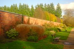 November Garden (Dave Roberts3) Tags: cardiff wales glamorgan autumn fall bench light shade shadow wall grass ornamental path leaf leaves butepark