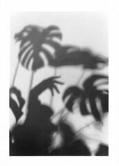 Living Shadows #5 (eight eight eighty) Tags: livingshadows shade shadow monstera plants leaf hands canonae1 35mm argentique bnw blackandwhite silverprint diy shootingfilm selfprint tmax400 muse rose peonies flowers 花