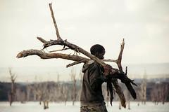 firewood (rick.onorato) Tags: kenya safari africa boy firewood