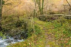 Pont sur  le gave (Coline Buch - http://coline-buch.fr/) Tags: 2017 64 aquitaine aquitainelimousinpoitoucharentes colinebuch france gave lasoule larrau paysbasque pyrénéesatlantiques campagne extèrieur extérieur montagne nature tourisme