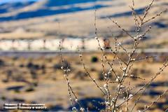 2017-11-25-Cajon-Pass-16 (Robert T Photography) Tags: roberttorres robertt robert torres roberttphotography serrota serrotatauren canon cajonpass cajon cajonsubdivision bnsf up unionpacific burlingtonnorthernandsantafe
