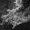 In Canyons 155 (noahbw) Tags: d5000 dof nikon utah zionnationalpark abstract autumn blackwhite blackandwhite blur branches bw canyon cliffs depthoffield landscape light monochrome natural noahbw rock square stone trees
