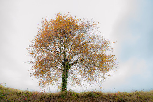 Dream tree in color