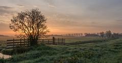 Delfland dawn (Jorden Esser) Tags: monday middendelfland canal farm fence field landscape sky sun sundawn sunrise trees nederlandvandaag