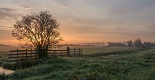 Delfland dawn