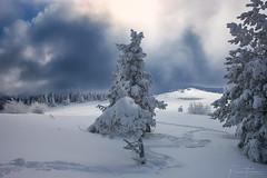 snow trap (Plamen Troshev) Tags: winter way white new landscape pine forest freeze sky explore breath taking landscapes