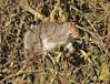 Snoozing squirrel (Lancs & Lakes Outback Adventure Wildlife Safaris) Tags: nikon d7200 600mm tamron blackpool martonmere greysquirrel sleep snooze doze sunbathing