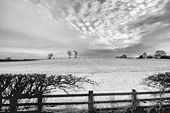 A winters tale. (acerman17) Tags: bw landscape snowy nature fields trees monochrome hedge clouds