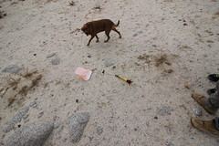 IMG_5268 (Gibrán Nafarrate) Tags: laguna salada bajacalifornia lagunasalada baja vw volkswagen desert desierto nature camping canon