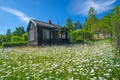 Antidote (RdeUppsala) Tags: uppland uppsala örsundsbro hus house casa jardín garden trädgård blommor flores flowers vår primavera spring sverige sweden suecia paisaje landscape landskap