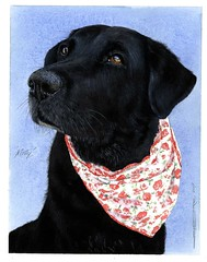 "Molly portrait - blackwater Vets 150 • <a style=""font-size:0.8em;"" href=""http://www.flickr.com/photos/64357681@N04/23971607167/"" target=""_blank"">View on Flickr</a>"
