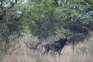 Namibia Luxury Hunting Safari 310