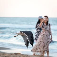 Captured in Flight (Marion E Photography) Tags: beach ocan travel virginiabeach