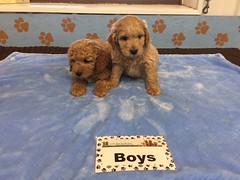 Roxie Boys pic 2 12-10