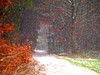 SCHNEEFALL AM 2. ADVENT:PC101027 (hans 1960) Tags: outdor winter december wald forest trees bäume blätter leaves tannen weg way schnee snow gras colour farben bunt wiese schneeflocken nature natur landschaft landscape weis white wonderland schneefall