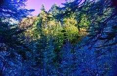 Peña Guara (Carlos M. M.) Tags: nature naturaleza peñaguara hdr huesca aragón pirineos trees bosque